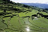 Pada Rice terrace. Scenic area. Yuanyang. China.