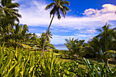 Palm trees and tropical vegetation at Vomo Island Resort contributes to the serenity and tranquility of the Fiji Islands