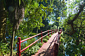 A bridge over a pond at the Magnolia Plantation, Charleston, South Carolina