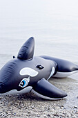 Ein aufblasbare Hai, Wal am Seeufer, Ammersee, Bayern, Deutschland
