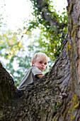 Young boy climbing trees, bavaria, Germany
