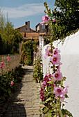 Flowers. Saint-Martin. Ile de Ré. Charente-Maritime. Poitou Charentes. France.