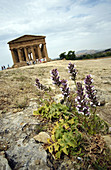 Temple at Agrigento. Sicily, Italy