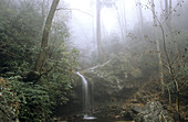 Quiet waterfall, Great Smoky Mountains National Park, Appalachian Mountains. Tennessee, USA