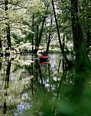 Man kayaking on Puschhalle Fließ (stream), mainly alder trees, near Lübbenau, Upper Spreewald, biosphere reservat, Spreewald, Brandenburg, Germany