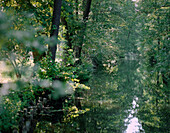 Main canal of the river Spree (Hauptspree) at Burg-Kolonie with alder trees, Upper Spreewald, biosphere reserve, Spreewald, Brandenburg, Germany