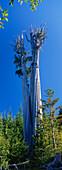 View at giant tree, Olympic National Park, Washington, USA
