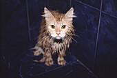 Wet kitten.