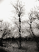 Bare trees in winter are captured thorugh a rain soaked window creating a wavy, rippled effect.