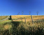 Afternoon Light, Fenceline, Road and Wind Turbines near Pincher Creek, Alberta, Canada