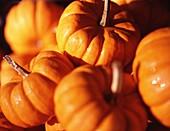Aliment, Aliments, Close up, Close-up, Closeup, Color, Colour, Daytime, Exterior, Food, Foodstuff, Gourd, Gourds, Little, Nourishment, Orange, Outdoor, Outdoors, Outside, Pumpkin, Pumpkins, Small, Still life, Vegetable, Vegetables, S68-482375, agefotostoc