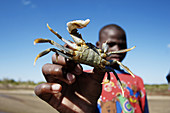 African, Africans, Animal, Animals, Black people, Close up, Close-up, Closeup, Color, Colour, Contemporary, Crab, Crabs, Crustacean, Crustaceans, Detail, Details, Ethnic, Ethnicity, Finger, Fingers, Fisherman, Fishermen, Fishing, Hand, Hands, Hold, Holdin