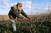 Vine-grower taking care of vineyard in early spring, Champagne district, France