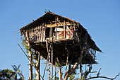 Traditional Koroway house perched in a tree 35 meters above the ground, Western Papuasia, former Irian-jaya, Indonesia