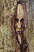 Angst, Außen, Baum, Bäume, Baumstamm, Baumstämme, Detail, Details, Farbe, Geheimnis, Geheimnisvoll, Gesicht, Gesichter, Holzschnitzerei, Moos, Nahaufnahme, Nahaufnahmen, Skulptur, Skulpturen, Stamm, Stämme, Tageszeit, T71-545920, agefotostock