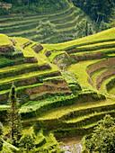 dream rice terraces, Yuanyang, China