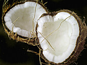 Coconut. Cocos nucifera, used in cooking and for oil. Pune, Maharashtra, India.