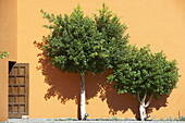 Typical Andalusian courtyard with orange trees. Sevilla, Andalusia, Spain.