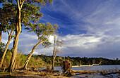 Coastal rain forest affected by tsunami. Andamans. India.