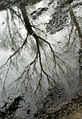 B&W, Black-and-White, Branch, Branches, Cold, Coldness, Exterior, Mirror image, Mirror images, Mysterious, Mystery, Nature, Outdoor, Outdoors, Outside, Plant, Plants, Reflection, Reflections, Season, Seasons, Tree, Trees, Trunk, Trunks, Vegetation, Water,