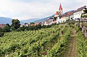 Weinanbau bei Weißenkirchen in der Wachau, Niederösterreich, Österreich