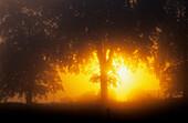 Europe, Germany, Mecklenburg-Western Pomerania, isle of Usedom, forest at sunrise