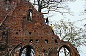 Children climbing on monastery ruin Eldena, Greifswald, Mecklenburg-Western Pomerania, Germany