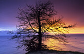 Bare tree in sunrise, Ernst-Moritz-Arndt-Sicht, Jasmund National Park, Rugen island, Mecklenburg-Western Pomerania, Germany