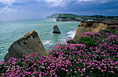 Europe, Great Britain, England, Isle of Wight, Freshwater Bay
