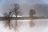 View over lake to bare deciduous trees in morning mist, Kiel, Schleswig-Holstein, Germany