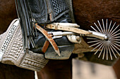 Cowboy boot with spur at a rodeo in Conchi, Chiloé, Chile, South America