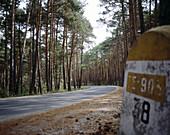 Pinewood near Bronchales. Teruel province, Spain