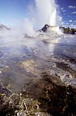 Tortoise shell spring, geyser erupting. Yellowstone National Park. Wyoming. USA