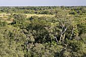 Pantanal, the world largest wetland, Brazil, South America