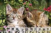 Two sleeping young cats
