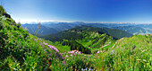Alpine pasture with Chiemgau range in background, Chiemgau, Bavaria, Germany