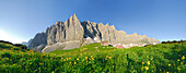panorama of Karwendel range obove mountain lodge Falkenhütte, globeflowers in foreground, Karwendel range, Tyrol, Austria