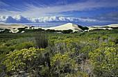 Coastal dunes and fynbos flora, De Hoop Nature Reserve, Western Cape, South Africa