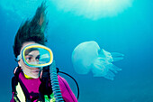 Diver and Stiff arms Jellyfish (Rhizostoma pulmo). Galicia, Spain