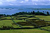 Meadow landscape with dry stone walls, Lough Corrib, Connemara, Co. Galway, Ireland, Europe