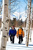 Two men walking between birch trees through the snow, Hokkaido, Japan, Asia
