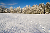 Winter landscape with animal tracks, Upper Bavaria, Germany