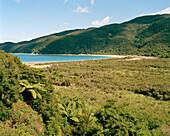 Baumfarne vor Onetahuti Beach im Sonnenlicht, Abel Tasman Nationalpark, Nordküste, Südinsel, Neuseeland