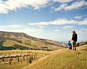 Shepherd Lou Thacker and a child looking at flock of sheep, Rowendale Homestead, Okains Bay, Banks Peninsula, South Island, New Zealand