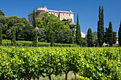 A vineyard in front of the castle Chateau Suze-la-Rousse, Drome, Provence, France