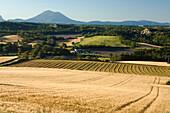 Landscape with grain fields, Alpes-de-Haute-Provence, Provence, France