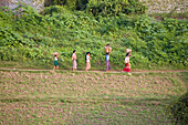 Burmese women carrying wood on Inwa island ( Ava ) at Ayeyarwady River near Amarapura, Myanmar, Burma