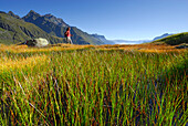 young woman hiking on marsh meadow in autumn colours with Habicht in background, fog bank in valley Gschnitztal, Stubaier Alpen range, Stubai, Tyrol, Austria