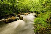 River Baias in alder wood, Gorbeia Natural Park. Murgia, Alava, Euskadi, Spain