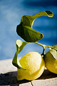 Aliment, Aliments, Citrus fruits, Close up, Close-up, Closeup, Color, Colour, Daytime, Exterior, Food, Foodstuff, Fruit, Fruits, Healthy, Healthy food, Leaf, Leaves, Lemon, Lemons, Nourishment, Outdoor, Outdoors, Outside, Plant, Plants, Still life, D37-52